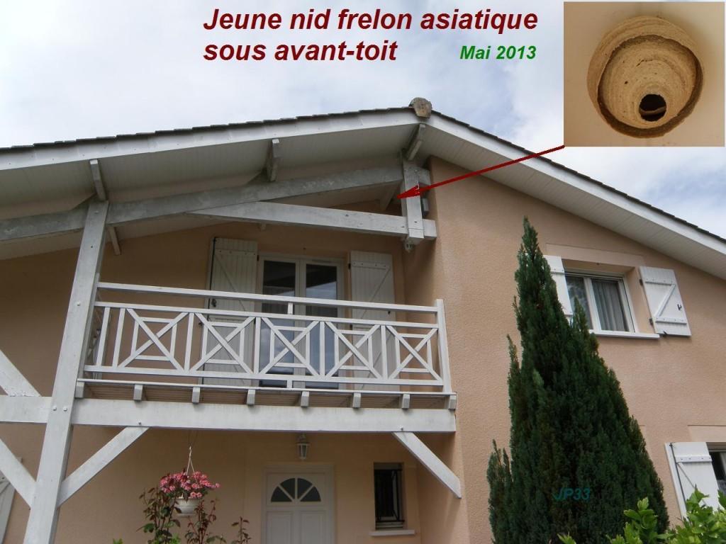 Nid primaire de frelon asiatique sous avant toit. Proximité dangereuse pour l'humain.
