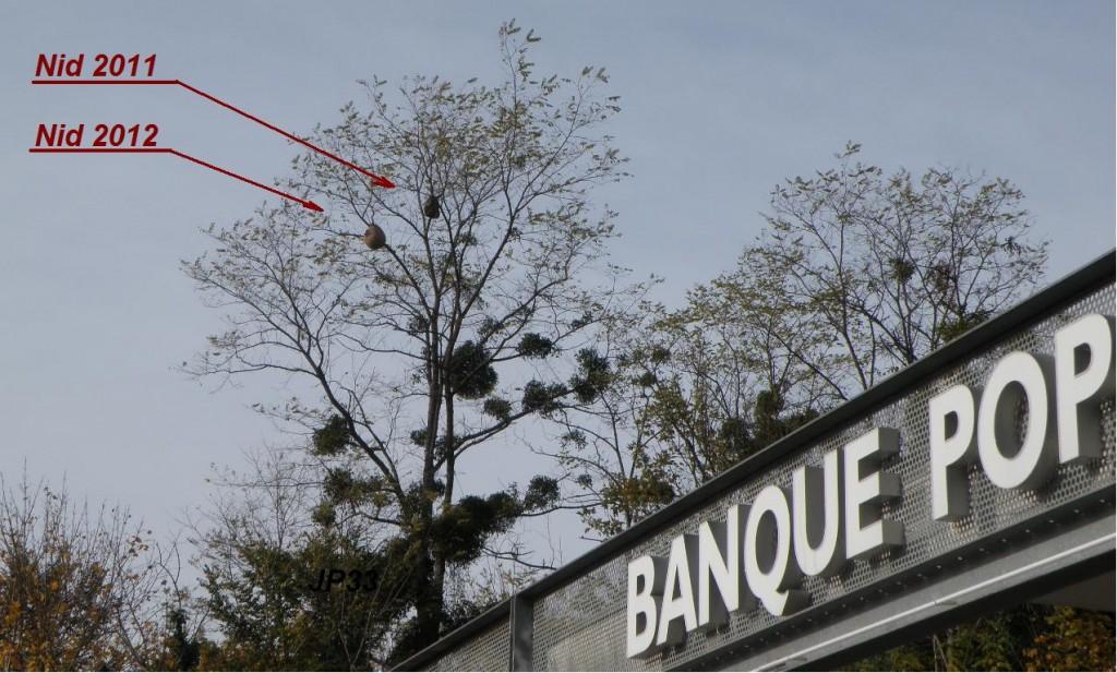 Un ancien nid de 2011 abandonné accompagné d'un nouveau nid en 2012 actif sur le même accacia.