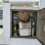 Nid dangereux de frelon asiatique, implanté dans un coffret de compteur à gaz.