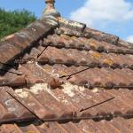 Frelons montant la garde sur toiture